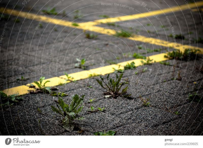 ...platz Pflanze Unkraut Verkehr Parkplatz Pflastersteine Stein Beton Linie gelb grün Farbfoto Außenaufnahme Menschenleer Schwache Tiefenschärfe