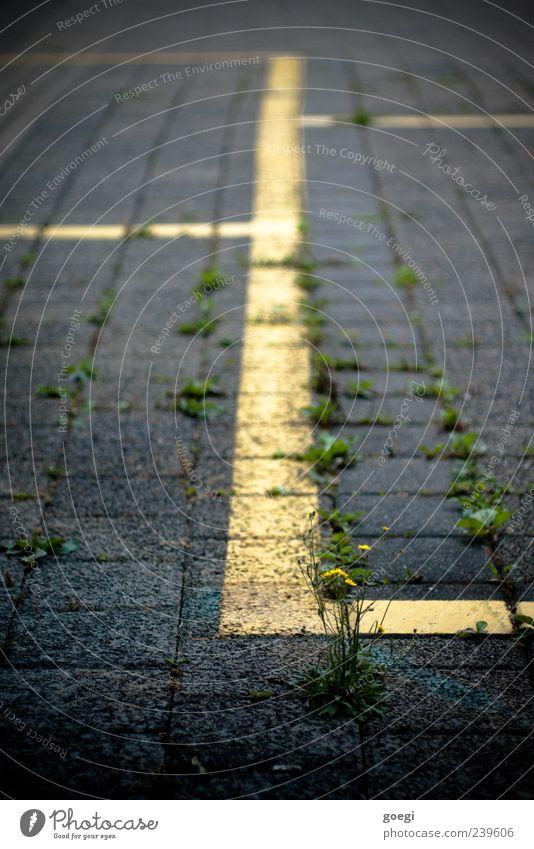 Park... Unkraut Verkehr Parkplatz Pflastersteine Stein Beton Linie gelb grün Farbfoto Außenaufnahme Menschenleer Schwache Tiefenschärfe Grünpflanze Wachstum