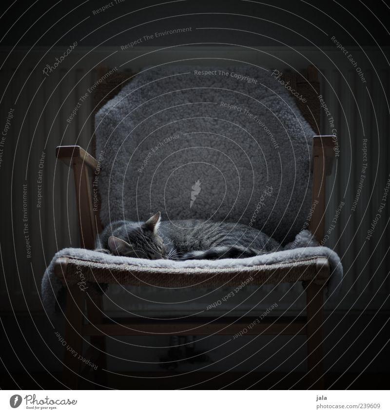 schlafplatz Katze Tier ruhig Wohnung schlafen niedlich Stuhl Fell Haustier gemütlich kuschlig Möbel Schlafplatz Ruhemöbel