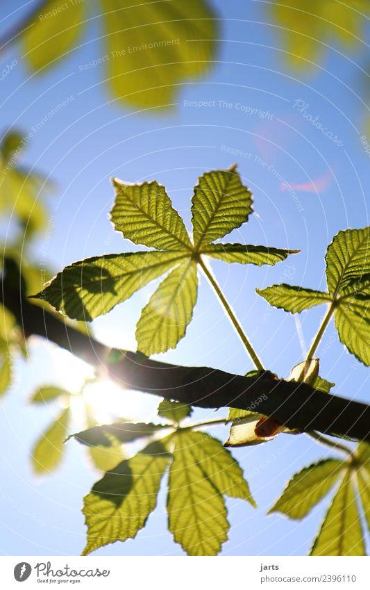 sonnenschein Natur Pflanze Himmel Sonne Sonnenlicht Frühling Sommer Schönes Wetter Baum Blatt Park Wald frisch natürlich schön blau grün Freude Frühlingsgefühle