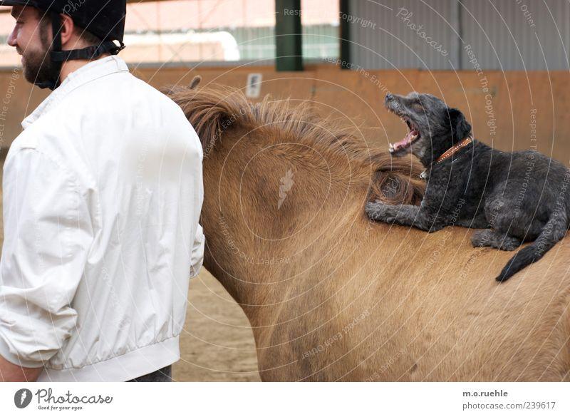 B. Stadtmusikanten Mensch Hund Tier ruhig lustig Freundschaft Freizeit & Hobby maskulin Pferd Fell Haustier gemütlich tierisch Humor Ponys ungestört