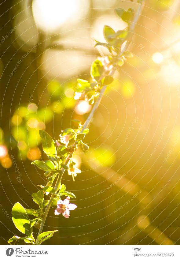Last Light of the Day Natur schön Sonne Pflanze Sommer Blume Blatt Umwelt Wärme Blüte Park braun Wetter gold rosa Klima