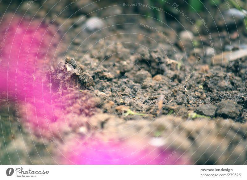 Gartenzauber Natur Pflanze ruhig Landschaft Garten Blüte träumen Erde außergewöhnlich Urelemente Boden Kreativität durcheinander Textfreiraum magenta Unschärfe