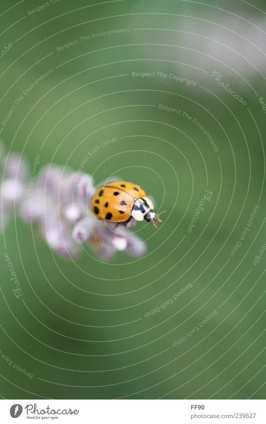 Endlich Oben Natur Pflanze Tier träumen niedlich Käfer Marienkäfer