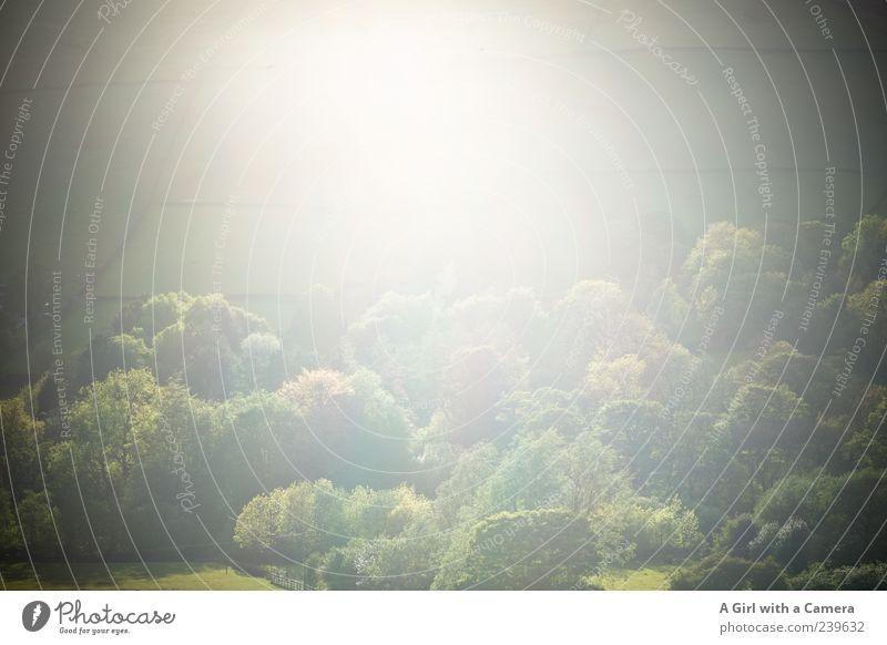 mellow grün Baum Wald Umwelt Wärme Gras Feld außergewöhnlich leuchten weich Hügel Textfreiraum Leichtigkeit Gegenlicht Tal schlechtes Wetter