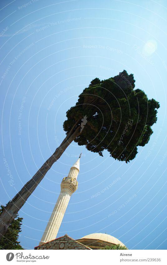 himmelwärts blau weiß grün schön Baum Religion & Glaube hoch ästhetisch Hoffnung Turm Dorf dünn Stolz Wolkenloser Himmel Blauer Himmel