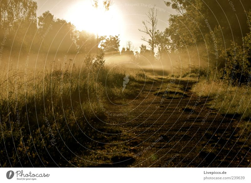 Milli Nebel Natur grün Baum gelb Gras Holz Wege & Pfade Sand Stimmung Nebel Sträucher Sonnenaufgang Sonnenuntergang