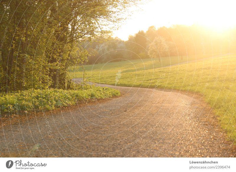 walk in golden light grün Baum ruhig Wald Straße Wärme gelb Frühling Wege & Pfade natürlich Gras Stimmung hell frei Schönes Wetter