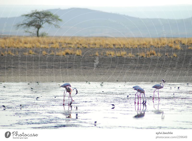 Kenia Himmel Natur Wasser Baum Pflanze Tier Ferne Umwelt Landschaft Ernährung Berge u. Gebirge Gras Sand Vogel Erde Wildtier