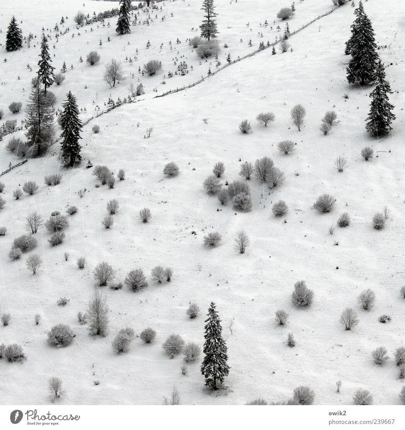Spalier stehen Umwelt Natur Landschaft Pflanze Winter Klima Wetter Eis Frost Schnee Baum Sträucher Wald Berge u. Gebirge Ferne gigantisch hell kalt blau schwarz
