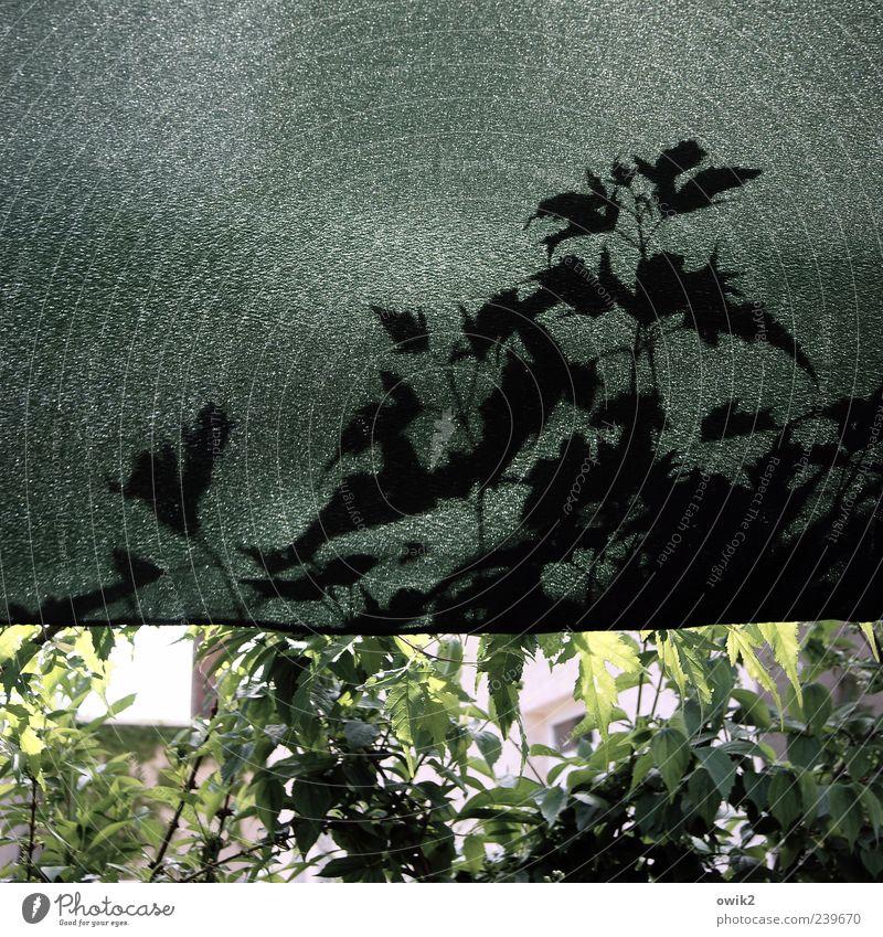 Unterm Baldachin (2) Häusliches Leben Pflanze einfach modern gelb grau grün schwarz Kunststoff Stoff Abdeckung Schutz Farbfoto Gedeckte Farben Außenaufnahme