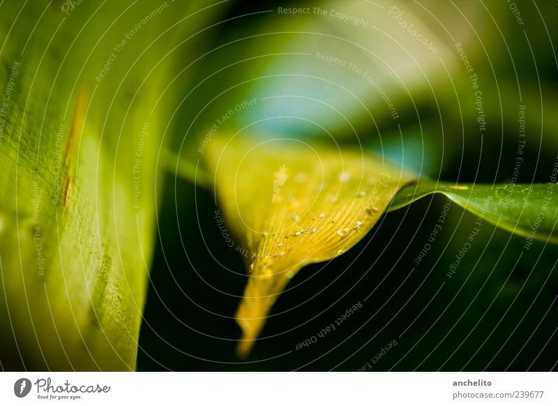 Blattgelb Umwelt Natur Pflanze Grünpflanze dreckig dünn trocken grün schwarz ruhig Staub liegen Hintergrundbild Feinstaub vertrocknet Unschärfe Kratzer Riffel