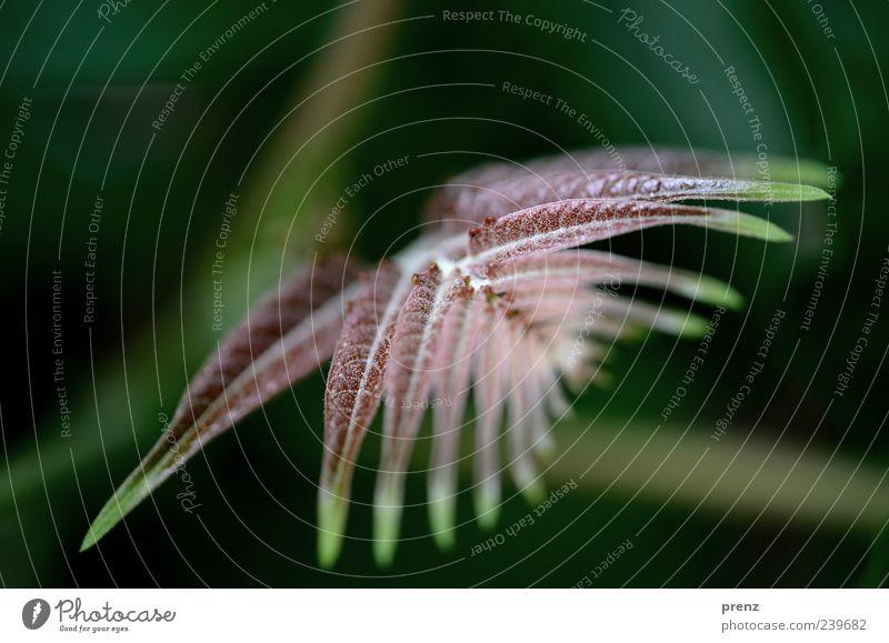 florales motiv Natur grün Pflanze Blatt Linie braun frisch Sträucher Zweig Bogen