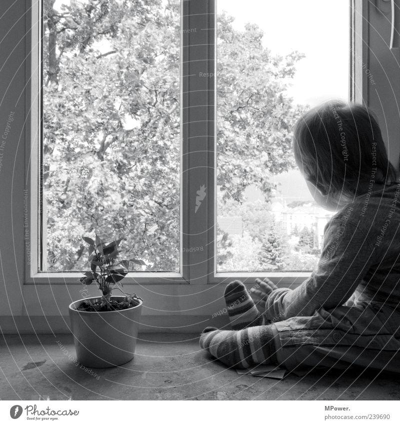 Aussicht Kind Mädchen Baum Blume Fenster beobachten entdecken klein grau schwarz weiß Fensterbrett Ringelsocken verträumt staunen Traurigkeit Junge Einsamkeit