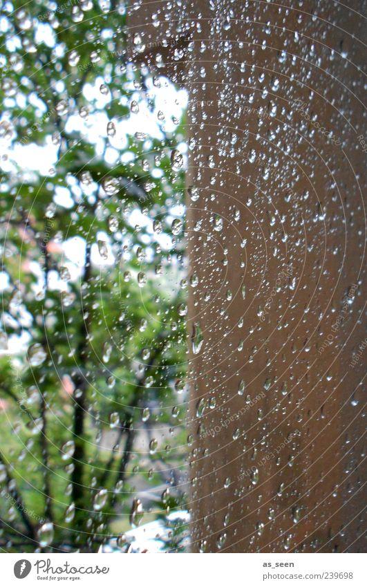 Regentag Himmel Wasser grün Baum Sommer ruhig Fenster Wand grau Stein Mauer träumen Stimmung braun Wetter
