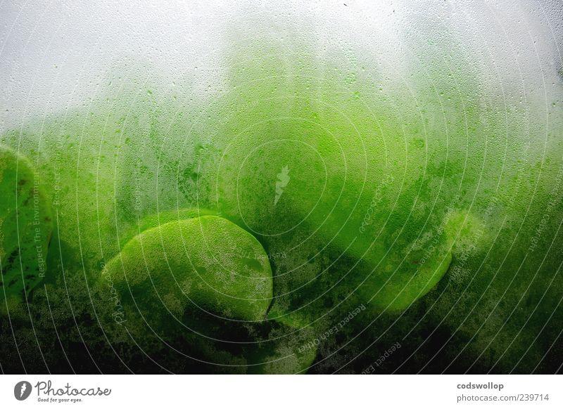 bill masen's gewächshaus grün grau außergewöhnlich nass Grünpflanze Gewächshaus Nutzpflanze Muster
