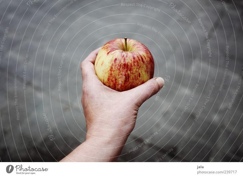 ein apfel Lebensmittel Frucht Apfel Ernährung Bioprodukte Vegetarische Ernährung Mensch Frau Erwachsene Hand 1 Gesundheit gut lecker grau rot anbieten Farbfoto