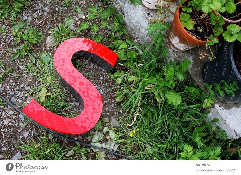 ich kaufe ein S grün rot Pflanze Gras Garten Schriftzeichen Boden Sträucher Tropfen Zeichen Typographie Wort verloren Unkraut Großbuchstabe wegwerfen