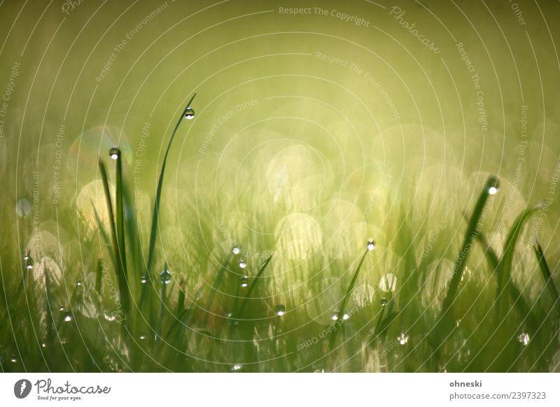 Tautropfen Natur Urelemente Wassertropfen Gras Halm Wiese grün Stimmung Frühlingsgefühle Vorfreude trösten dankbar achtsam ruhig Reinheit Hoffnung träumen