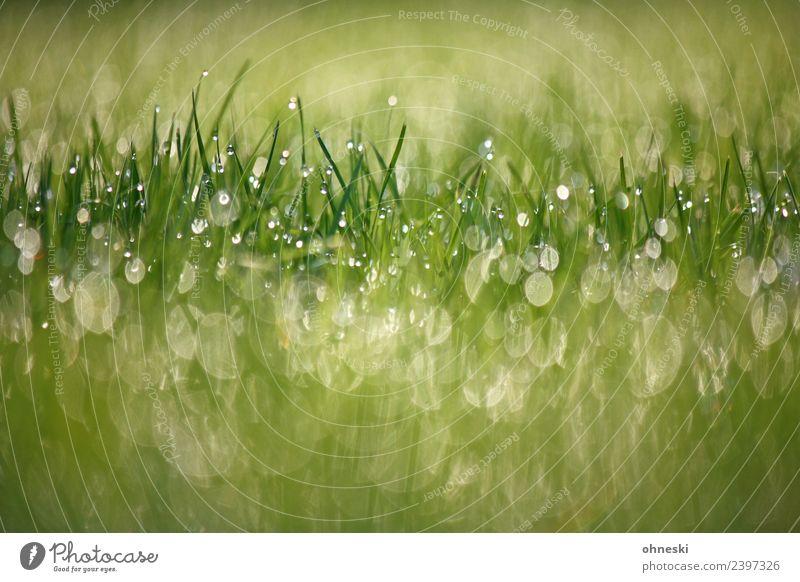 Gras im Morgentau Natur Pflanze grün ruhig Leben Wiese Glück Garten Stimmung Zufriedenheit Erde frisch Schönes Wetter Freundlichkeit Hoffnung
