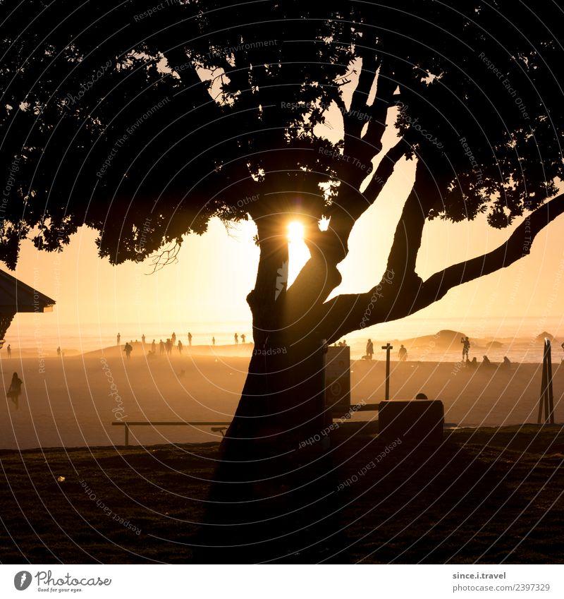 Baumschatten im Sonnenuntergang am Strand in Kapstadt Tourismus Abenteuer Ferne Sommer Natur Landschaft Pflanze Urelemente Sand Luft Wasser Schönes Wetter Küste