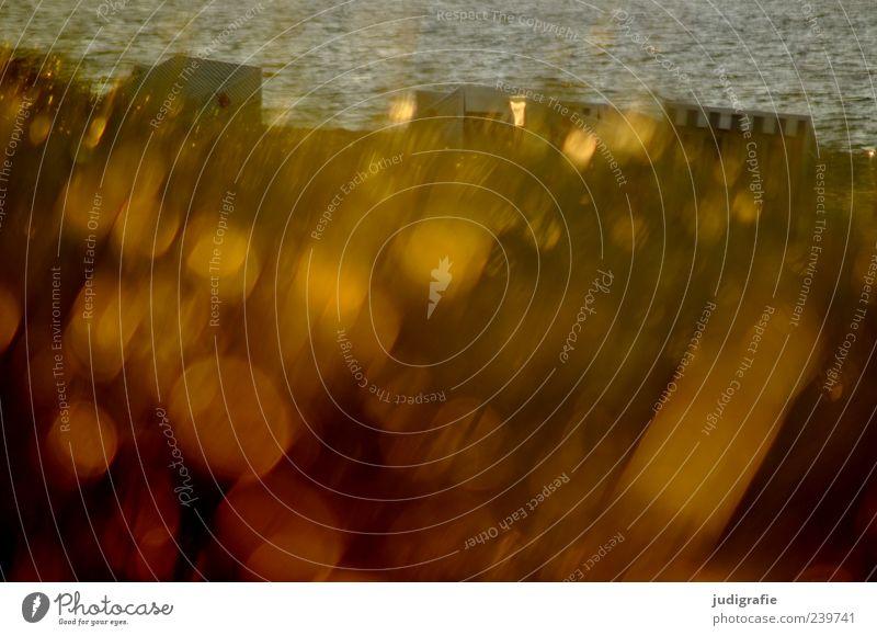 Abends Umwelt Natur Landschaft Pflanze Wasser Sonnenlicht Gras Küste Strand Ostsee leuchten außergewöhnlich fantastisch glänzend gold Stimmung Erholung