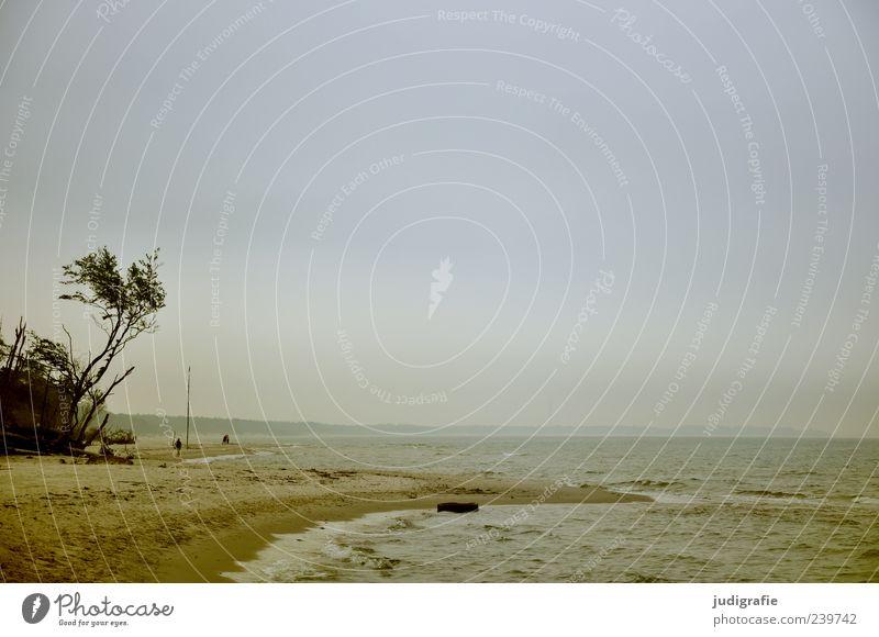 Weststrand Himmel Natur Wasser Ferien & Urlaub & Reisen Baum Pflanze Meer Strand Umwelt Landschaft Küste Sand Stimmung Wellen natürlich wild