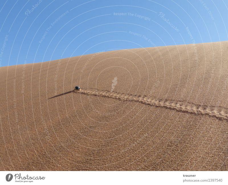 Long way to go Ferien & Urlaub & Reisen Tourismus Ausflug Sommer Sommerurlaub Sonne Sonnenbad Sand Wolkenloser Himmel Schönes Wetter Wärme Dürre Wüste Tier