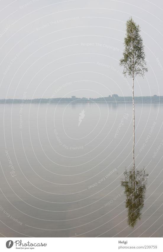 doppeltes Bäumchen... Himmel Natur Wasser Baum Pflanze Sommer Einsamkeit ruhig Ferne Umwelt Landschaft grau See Wetter Zufriedenheit Nebel