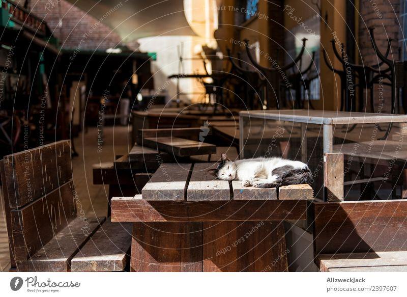 Katze liegt auf dem Tisch einer geschlossenen Bar Ferien & Urlaub & Reisen Sonne Erholung ruhig Ferne Reisefotografie liegen genießen schlafen Pause entdecken