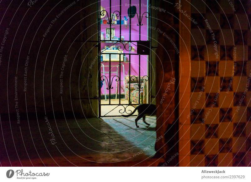 beleuchtete Wohnung nachts in Havanna Kuba Nachtaufnahme Fliesen u. Kacheln Haus Architektur Voyeurismus Katze Hauskatze schleichen dunkel erleuchten mehrfarbig