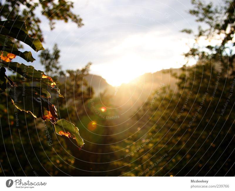 warming lens flares Natur Landschaft Pflanze Himmel Wolken Sonne Sonnenaufgang Sonnenuntergang Sonnenlicht Sommer Nebel Baum Blatt Grünpflanze Wald