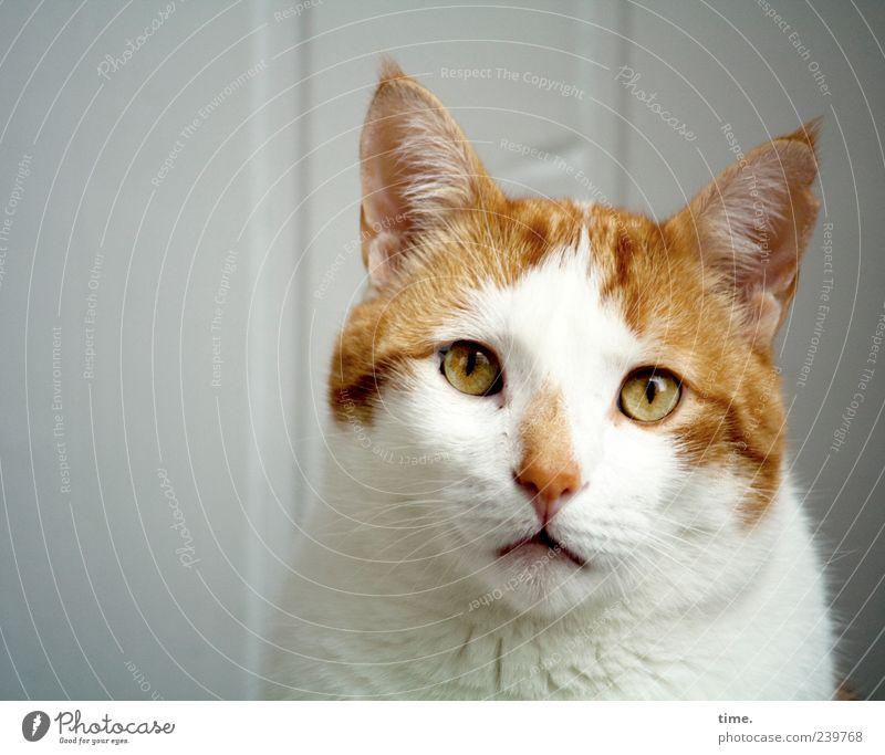 temporär derangiert Katze weiß Einsamkeit Tier Auge Gefühle Traurigkeit außergewöhnlich Kopf ästhetisch Nase Fell Ohr geheimnisvoll Hauskatze Frustration