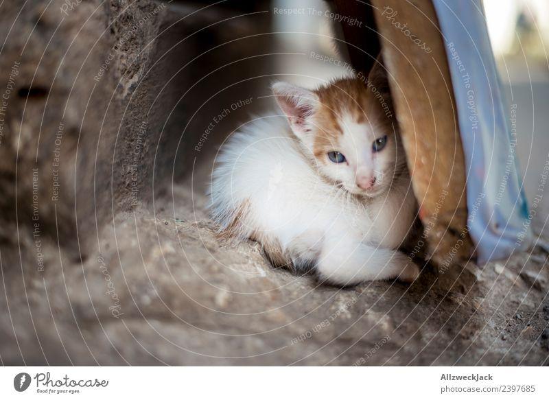 kleine Katze döst im Versteck Hauskatze kleines Kätzchen Katzenbaby Tierjunges Nachkommen Haustier verstecken verkriechen schlafen Halbschlaf schön süß