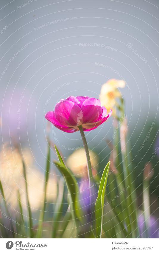 pinkes Blümchen Himmel Natur Sommer Pflanze schön Blume Umwelt Frühling Blüte Beleuchtung Wiese Kunst Garten rosa Park Luft