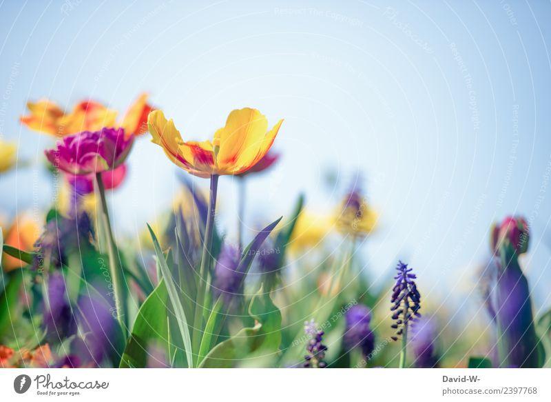 Blumenvielfalt Gesundheit Allergie Leben Zufriedenheit Sinnesorgane ruhig Umwelt Natur Landschaft Pflanze Sonne Frühling Sommer Klima Klimawandel Wetter