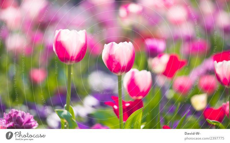 Mehrfarbigkeit Natur Sommer Pflanze schön Landschaft Blatt Umwelt Frühling Blüte Kunst rosa Park träumen Wetter Luft Lebensfreude
