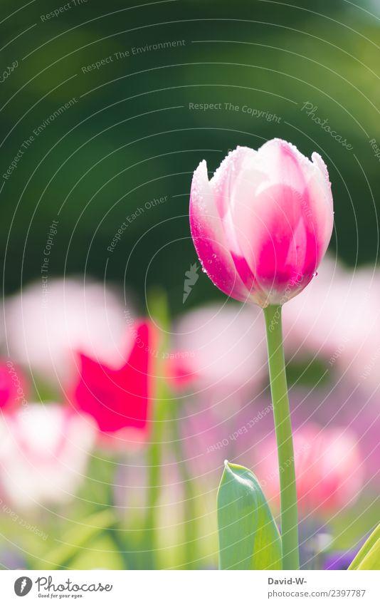 Regentropfen Kunst Künstler Museum Kunstwerk Gemälde Umwelt Natur Landschaft Pflanze Luft Frühling Sommer Klima Klimawandel Wetter Schönes Wetter Tulpe Blatt