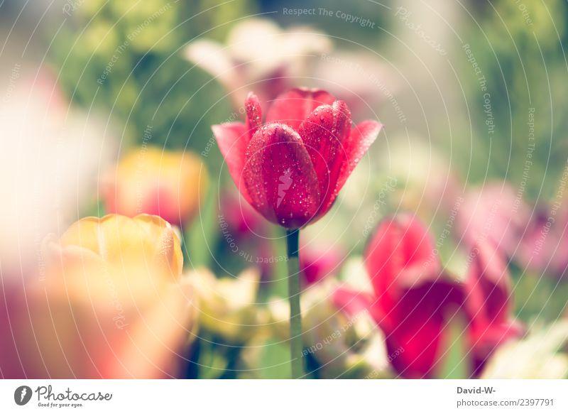 kurze Abkühlung Kunst Künstler Kunstwerk Gemälde Umwelt Natur Landschaft Pflanze Luft Sonne Sonnenlicht Klima Schönes Wetter Blume Tulpe Blatt Blüte Grünpflanze