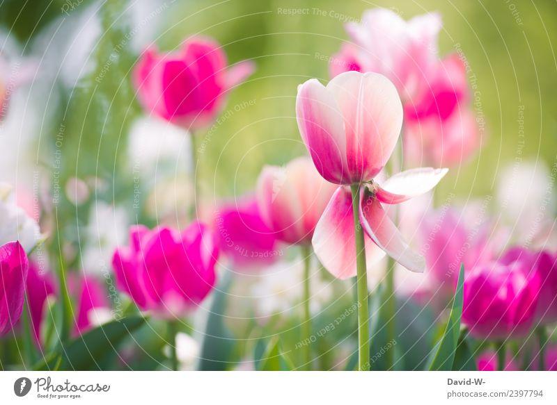 Geringe Lebenserwartung Natur Sommer Pflanze schön Wasser Landschaft Blume Blatt Gesundheit Umwelt Frühling Blüte Kunst Garten rosa Park