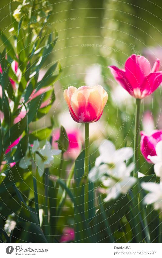 bunt im Grünen Natur Sommer Pflanze schön grün Landschaft Blume rot Umwelt Frühling Gefühle Kunst außergewöhnlich rosa träumen Wetter