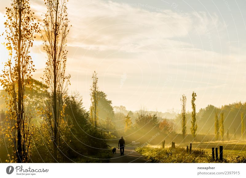 Hundespaziergang mit Nebel und Sonnenaufgang Spaziergang wandern Himmel Wolken Sonnenuntergang Sonnenlicht Frühling Sommer Baum Grünpflanze Park Wiese 1 Tier