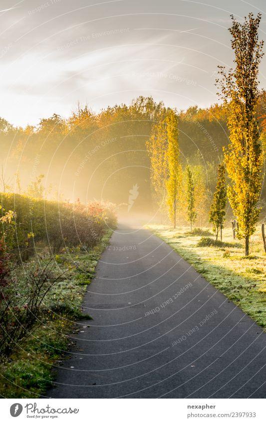 Weg mit Morgendunst und Sonnenaufgang Sport Joggen Feierabend Umwelt Natur Landschaft Himmel Sonnenuntergang Frühling Sommer Schönes Wetter Nebel Pflanze Baum