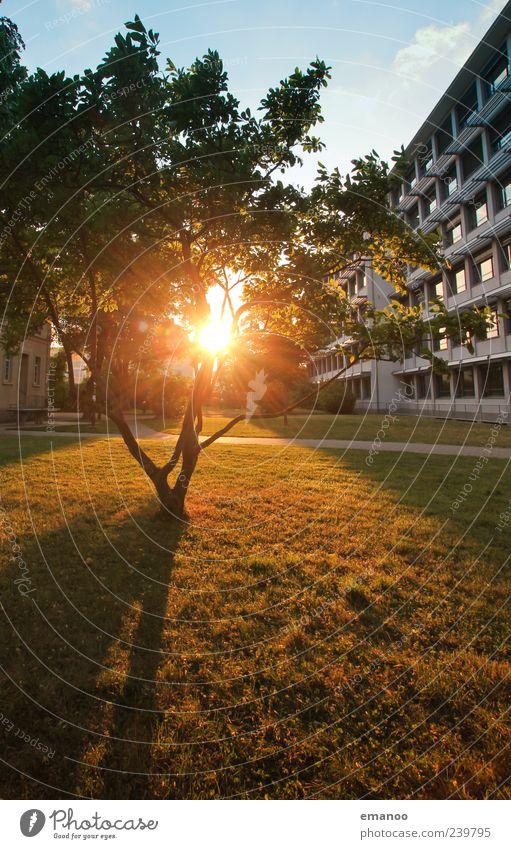 Durchlichtbäumchen Natur grün Baum Pflanze Sonne Ferien & Urlaub & Reisen Sommer Freude Blatt Haus gelb Wiese Architektur Garten Wärme Gebäude