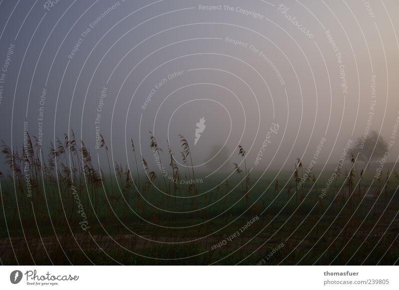 Abschied Landschaft Luft Himmel Herbst schlechtes Wetter Nebel Baum Gras Sträucher Wiese Feld Seeufer Teich dunkel fantastisch braun schwarz Gefühle Stimmung
