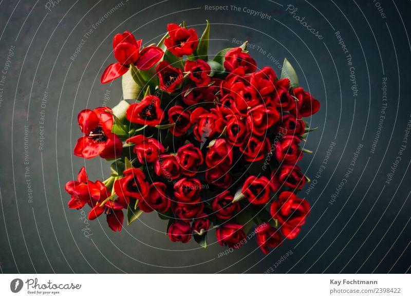Ein Strauß roter Tulpen elegant harmonisch Dekoration & Verzierung Valentinstag Muttertag Pflanze Frühling Sommer Blume Blatt Blüte Blumenstrauß Blühend