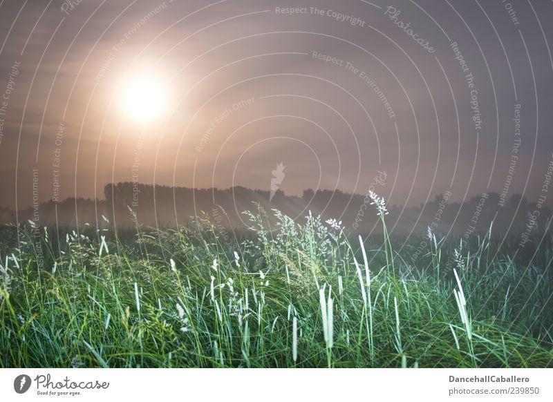 Sommernachtstraum I Natur Landschaft Himmel Wolken Nachthimmel Mond Vollmond Frühling Nebel Baum Gras Wiese ästhetisch Gefühle Stimmung geheimnisvoll Wetter