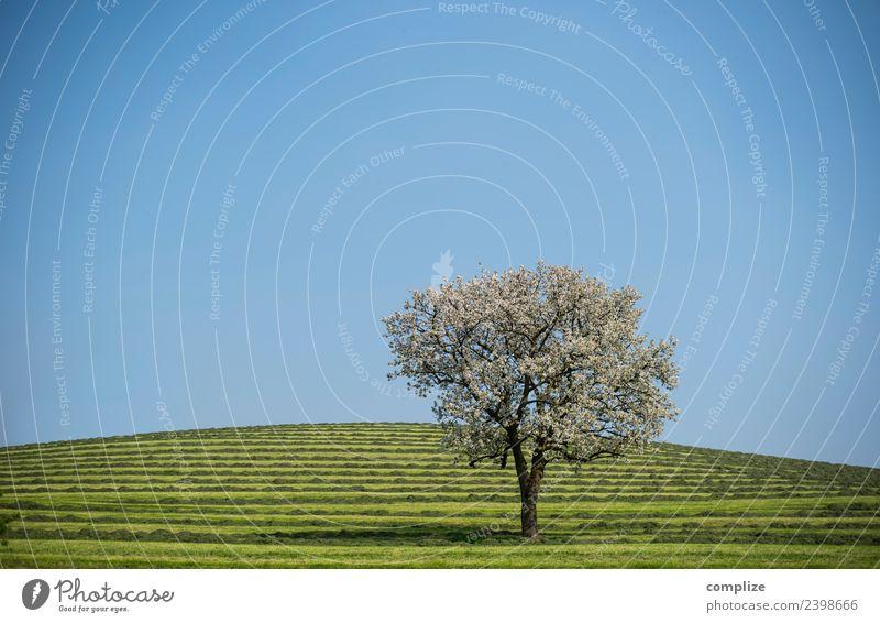 Blühender Baum auf grünen Streifen Stil schön Gesundheit Leben harmonisch Sinnesorgane Erholung Duft Ferien & Urlaub & Reisen Umwelt Natur Himmel