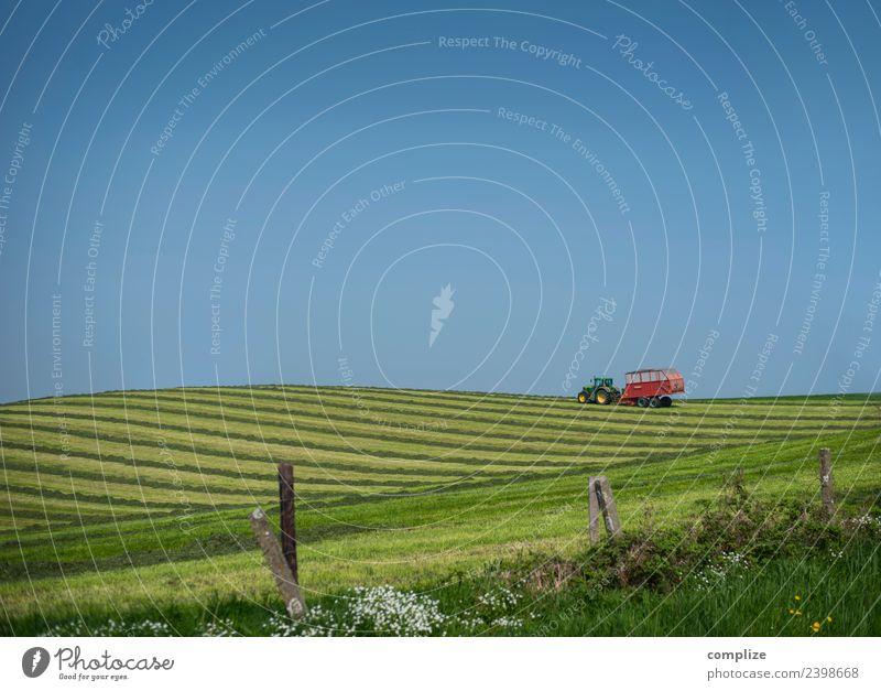 Landwirtschaft II Himmel Natur Ferien & Urlaub & Reisen Ferne Umwelt Wiese Gras Lebensmittel Freiheit Linie Feld Wachstum Blühend Klima Hügel