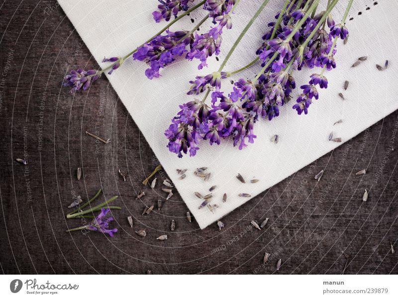 Lavendel rustikal Natur blau Pflanze Blume Holz Blüte braun Gesundheit liegen natürlich frisch authentisch Tisch Dekoration & Verzierung einfach violett